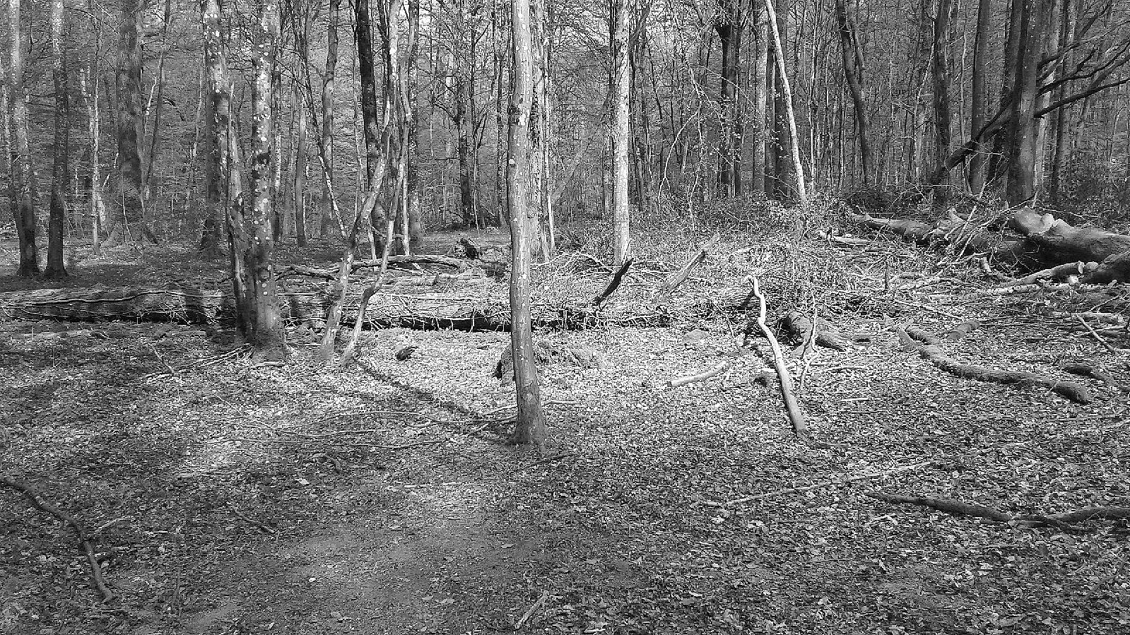 Paul Ewert: Lucemburský les III, digitální fotografie, 2020.